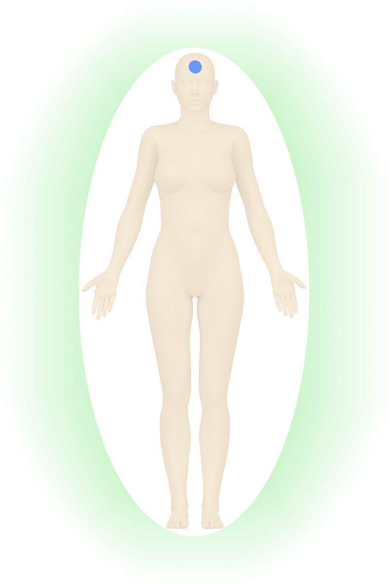 won-menschliche-organe